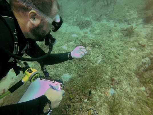 DEP Biologist Brendan Biggs performing an underwater survey