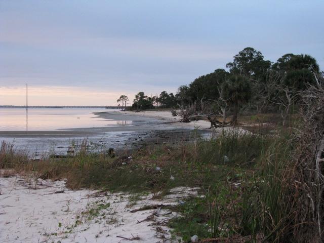 A view of the shoreline of Apalachicola Bay Aquatic Preserve Shoreline
