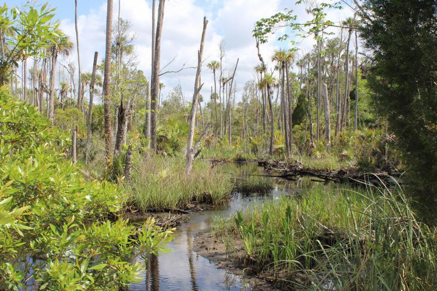 A tidal creek at St. Martins Marsh Aquatic Preserve