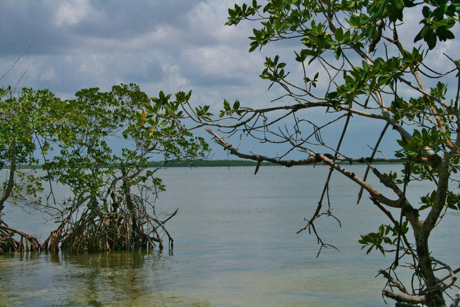 An above water view of mangroves at Biscayne Bay Aquatic Preserve