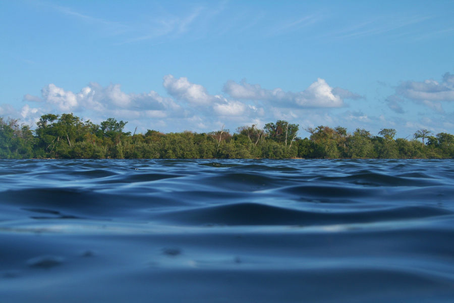 An offshore view of the shoreline of Biscayne Bay Aquatic Preserve