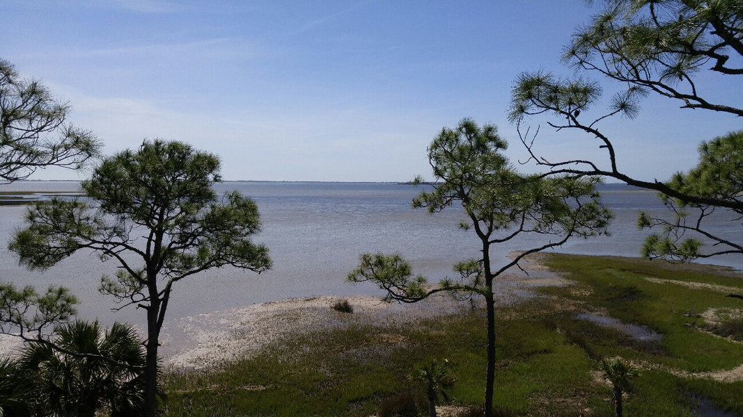 A view of the shoreline and waters of St. Joseph Bay Aquatic Preserve