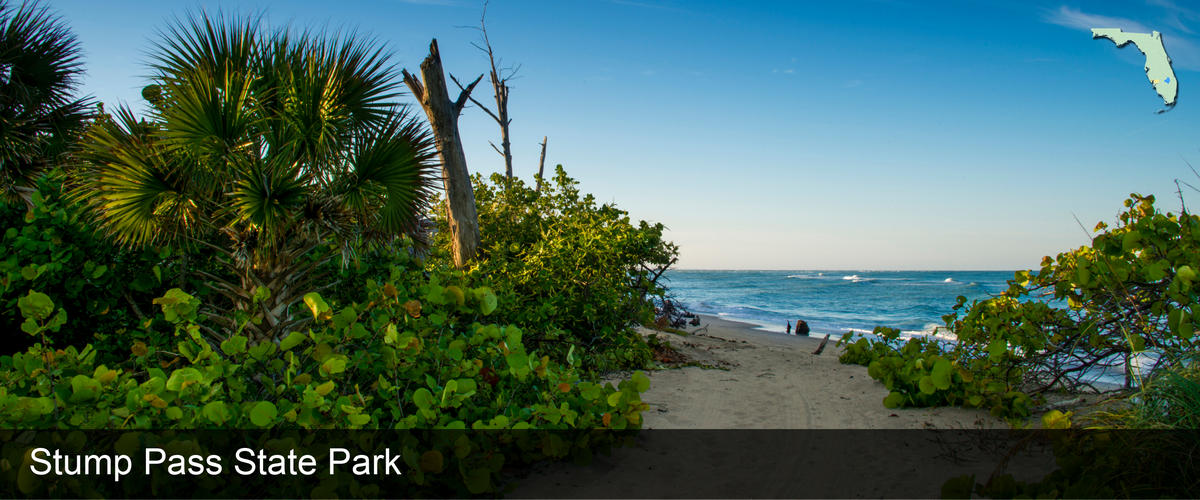A view of the water through palm trees and serapes at Stump Pass Beach in Charlotte County, Florida
