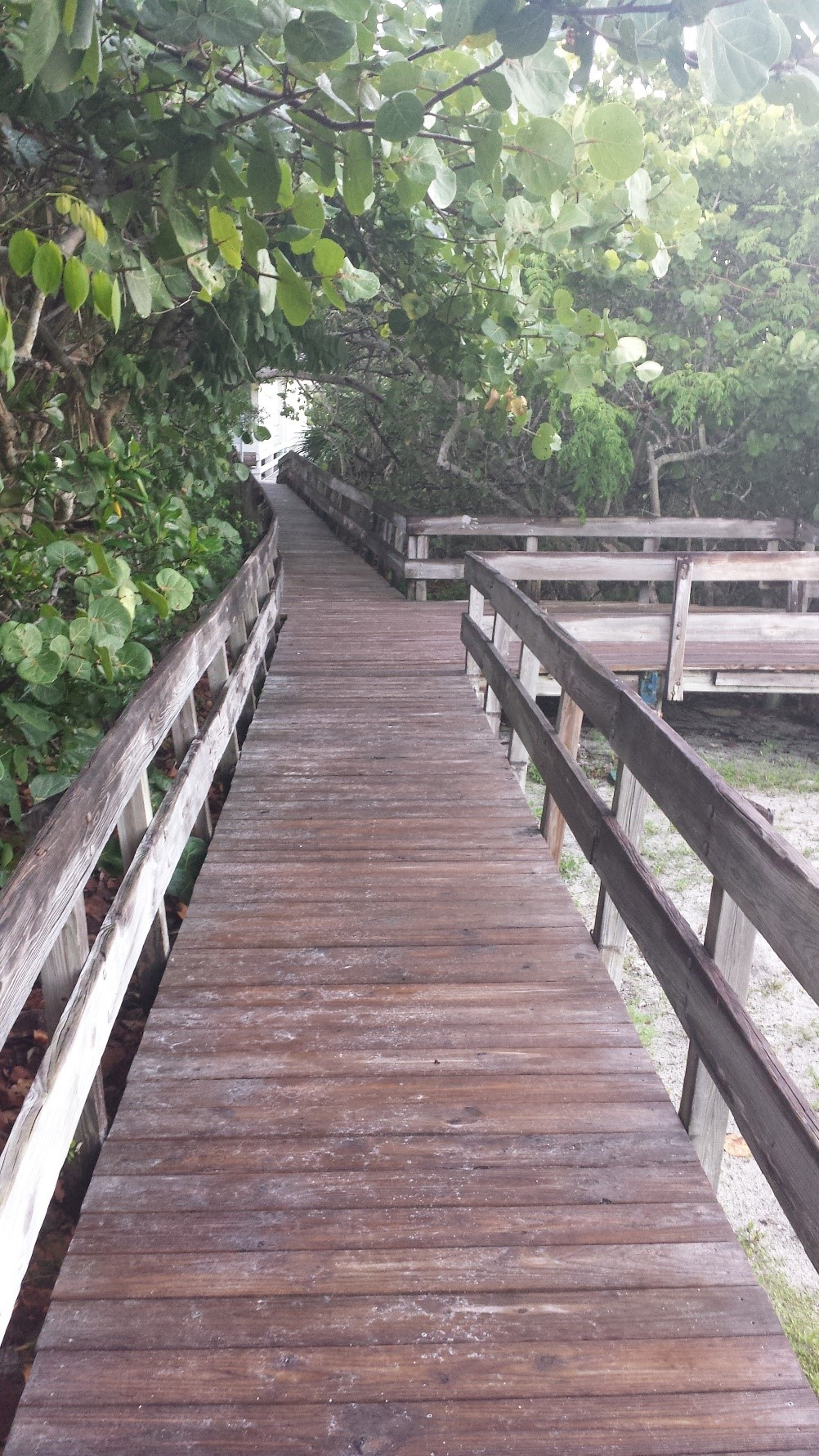 A photo of a completed boardwalk area at Delnor Wiggins State Park.