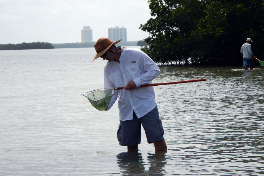 Wading trips engage visitors with many forms of marine life in Estero Bay