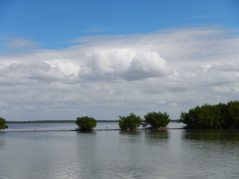 Mangrove community at Estero Bay Aquatic Preserve