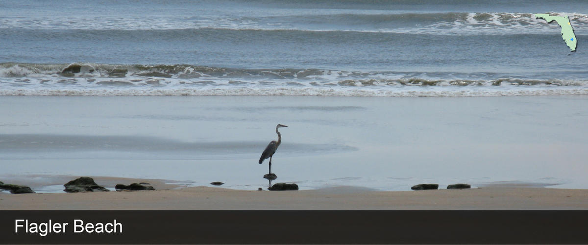 A bird standing on the shore at Flagler Beach in Flagler County, Florida