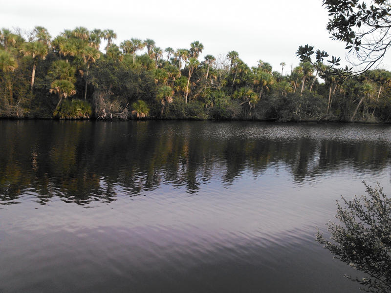 A view of North Fork St. Lucie River Aquatic Preserve