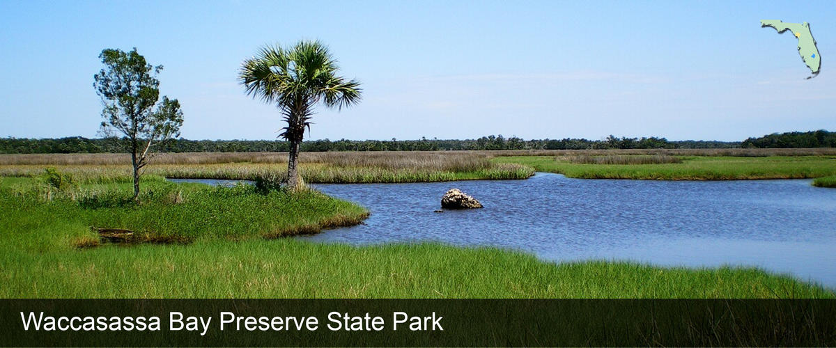 Looking across a salt marsh at Waccasassa Bay Preserve State Park in Levy County, Florida
