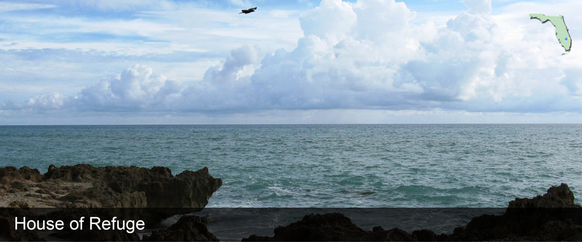 A bird flying over the rocks and water in Martin County, Florida