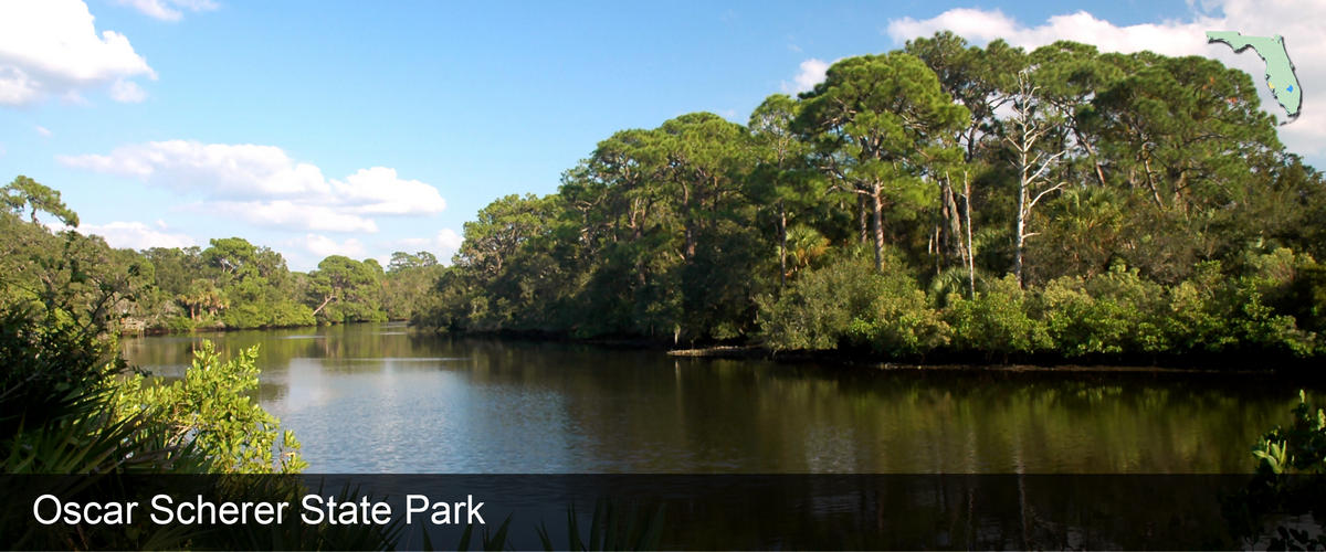 A view from the riverbank at Oscar Scherer State Park in Sarasota County, Florida