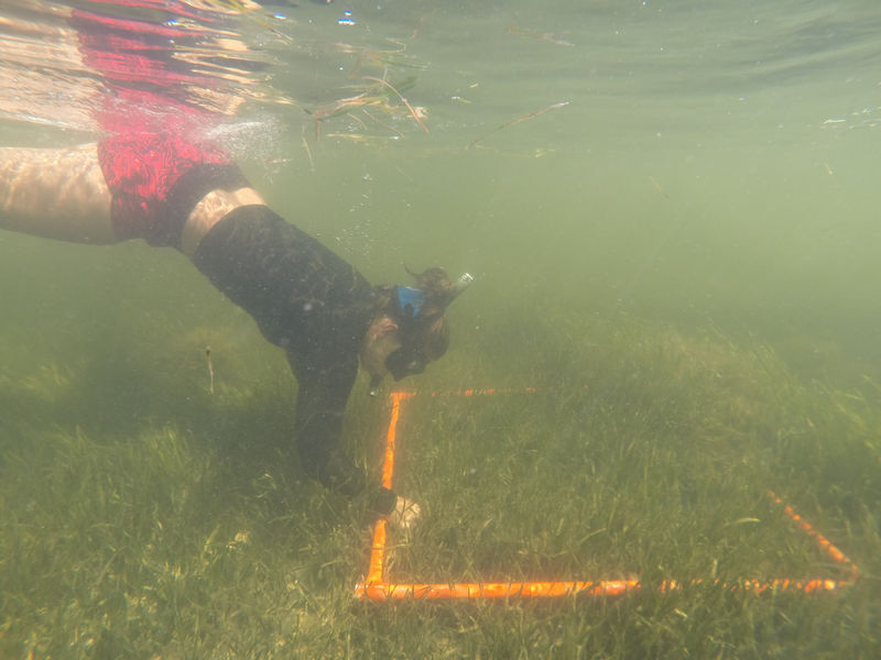 Staff use quadrats to conduct annual seagrass monitoring which helps measure the growth and overall health of seagrass beds.