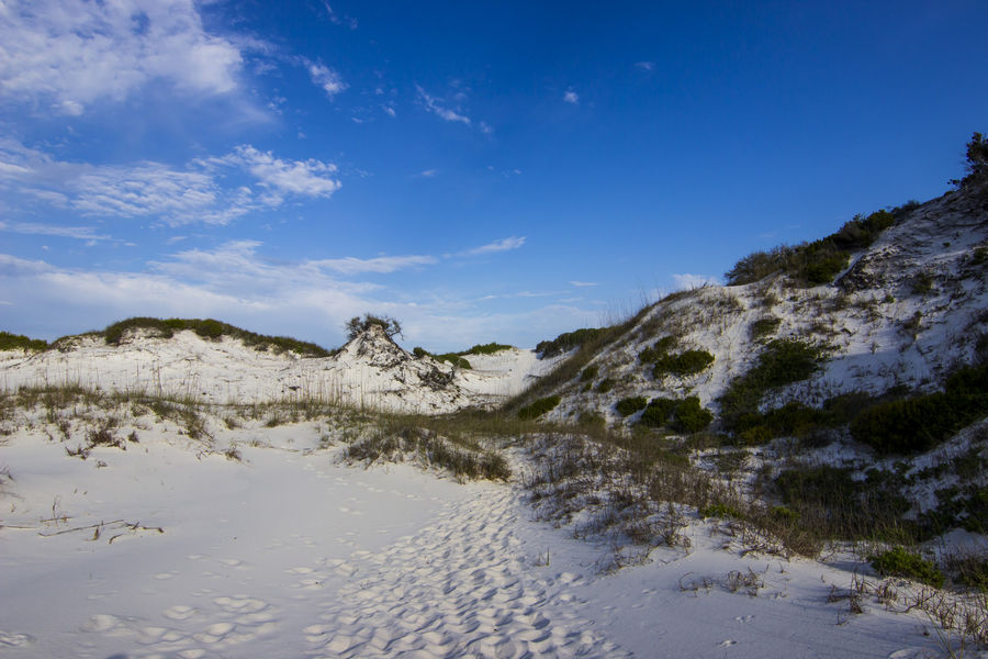 A trail on a dune at T.H. Stone Memorial St. Joseph Peninsula