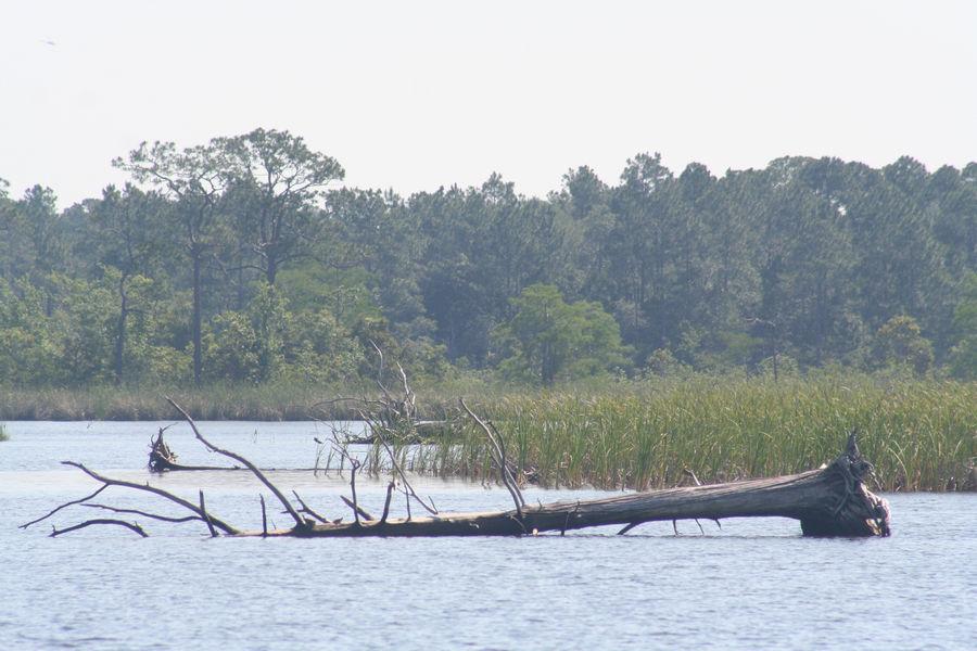 Yellow River Marsh Aquatic Preserve - DEP Staff - Beth Fugate - Downed t...