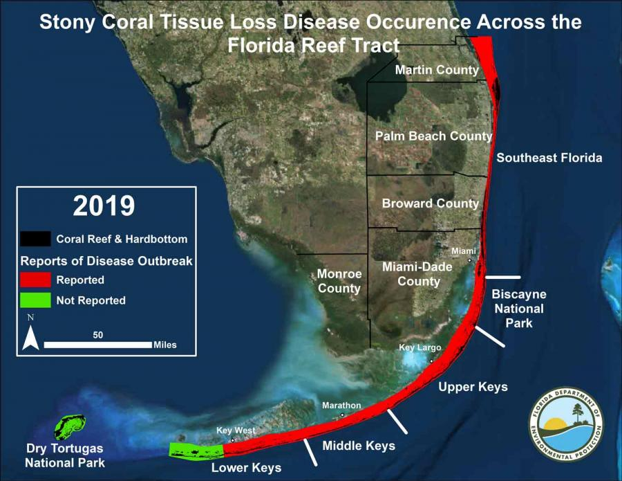 Stony Coral Tissue Loss (SCTL) Disease Response | Florida Department