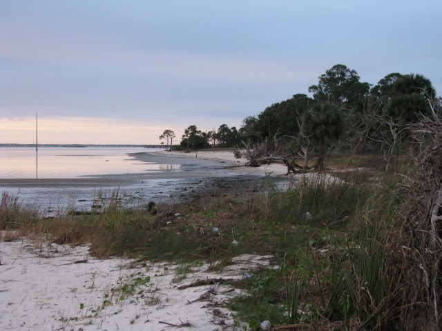 A view of the shoreline of Apalachicola Bay Aquatic Preserve Shoreline