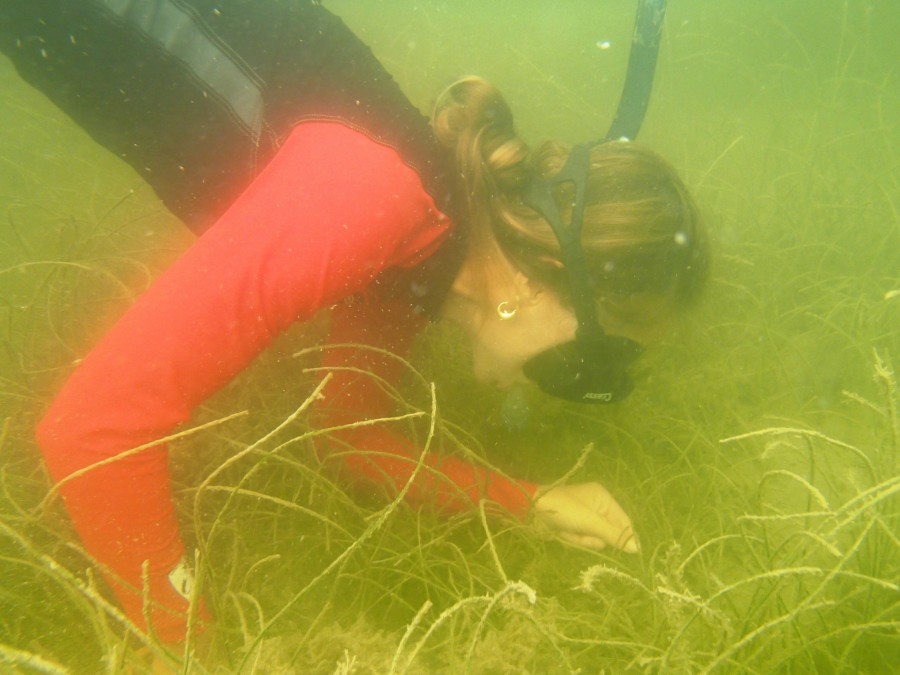 DEP staff monitor seagrass at 50 sites in the Charlotte Harbor Aquatic Preserves