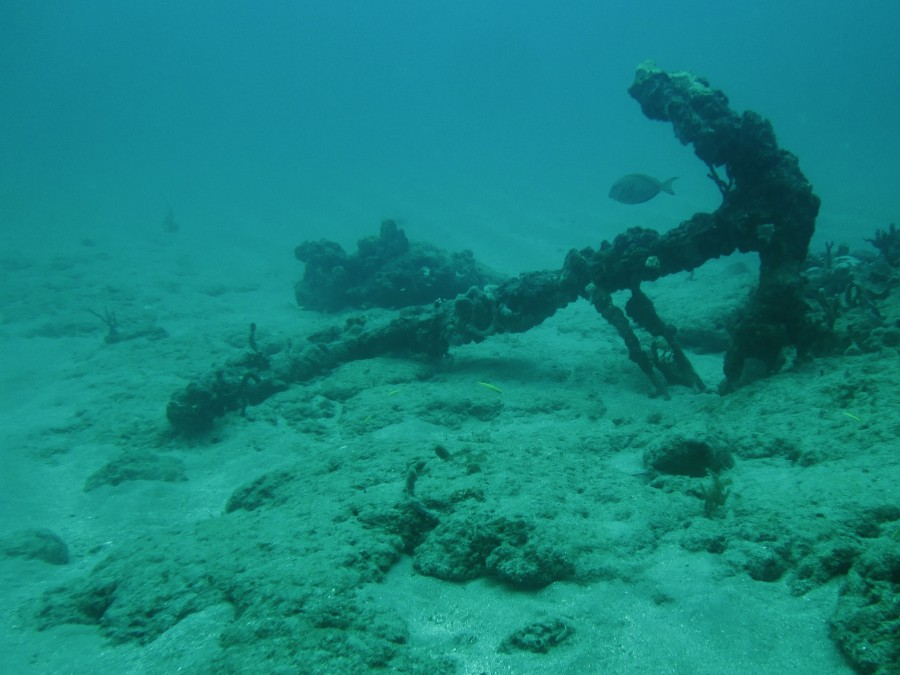 A coral reef damaged by an anchor