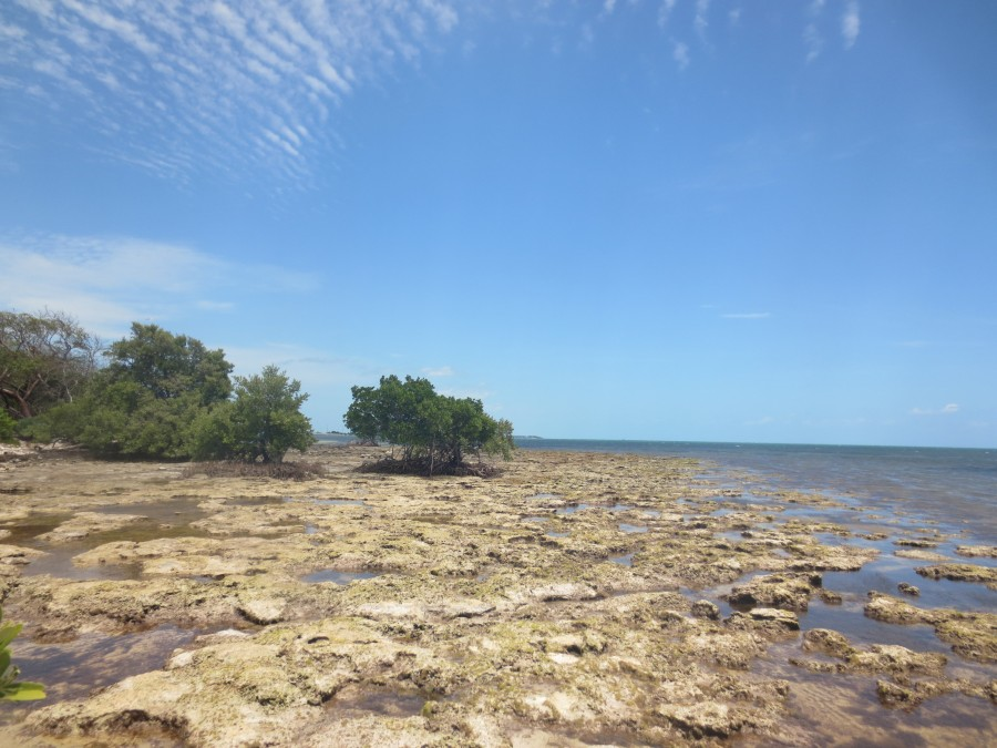 Looking across rocks and mangoves at Coupon Bight Aquatic Preserve at low tide