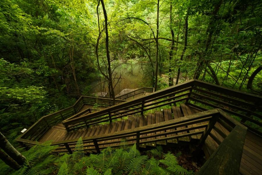Devil's Millhopper Geological State Park_2016 contest_Lou-Tennant_Devil039s- Millhopper-Sinkhole.jpg | Florida Department of Environmental Protection
