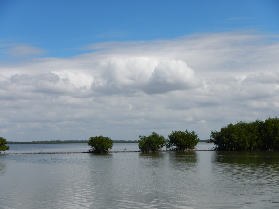 Mangrove community at Estero Bay Aquatic Preserve