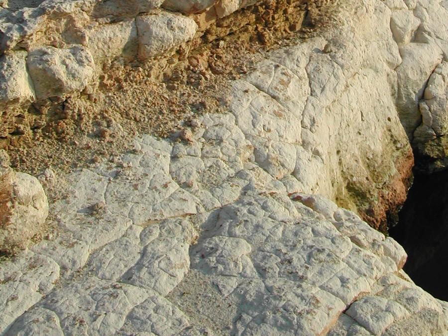 Chattahoochee Formation on Apalachicola River, Jackson County