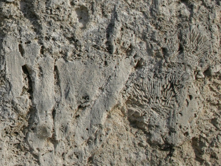 Key Largo Limestone at Windley Quarry, Monroe County