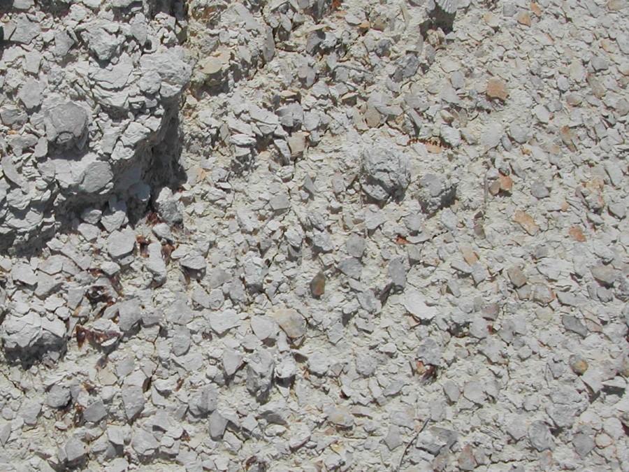 Marianna Limestone at Brooks Quarry, Jackson County