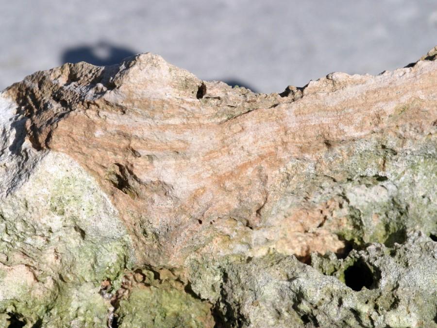 Miami Limestone with Saharan Dust at Elliott Key, Miami-Dade County