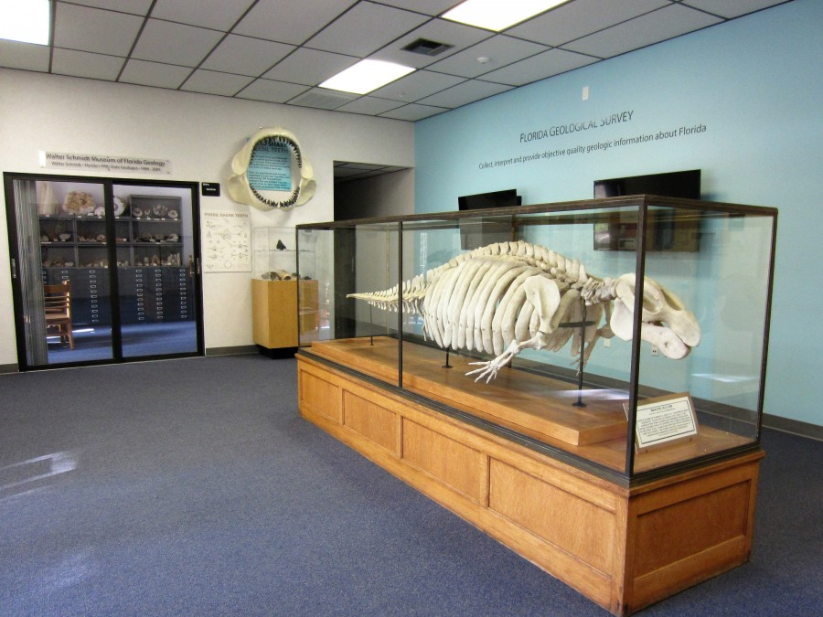 Walter Schmidt Museum Lobby featuring a Fossil Dugong Skeleton