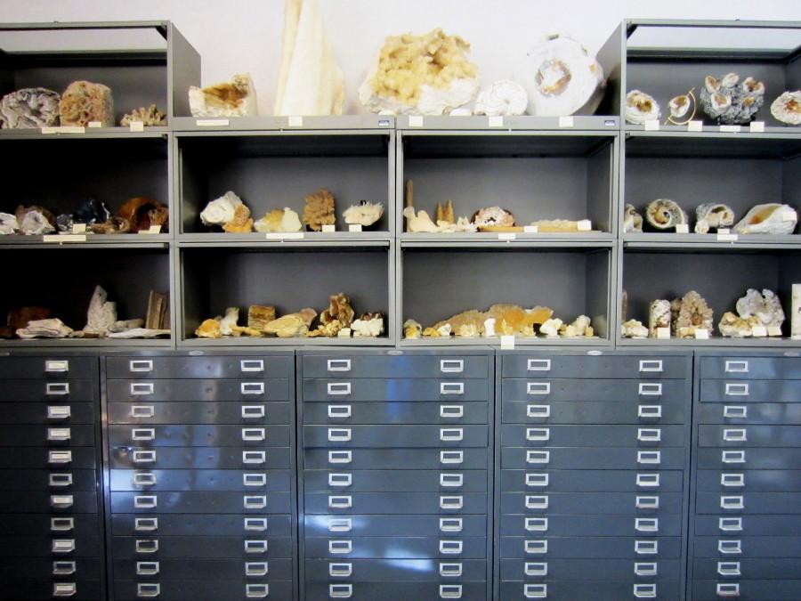 Specimen Display Inside Walter Schmidt Museum