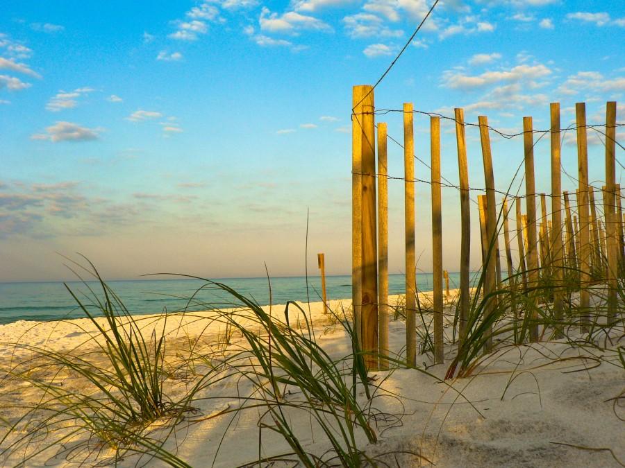 Grayton Beach State Park - Fence on the beach