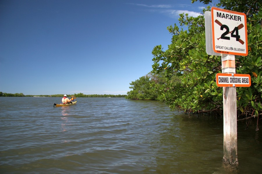 Paddling near the shore on the Calusa Blueway