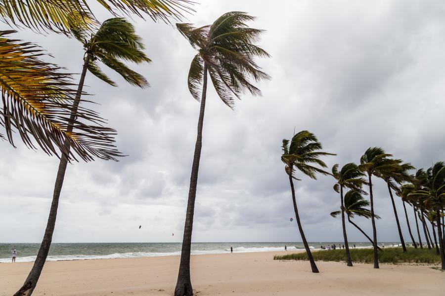 Hurricane Winds on Beach, Palm Trees, and Kites