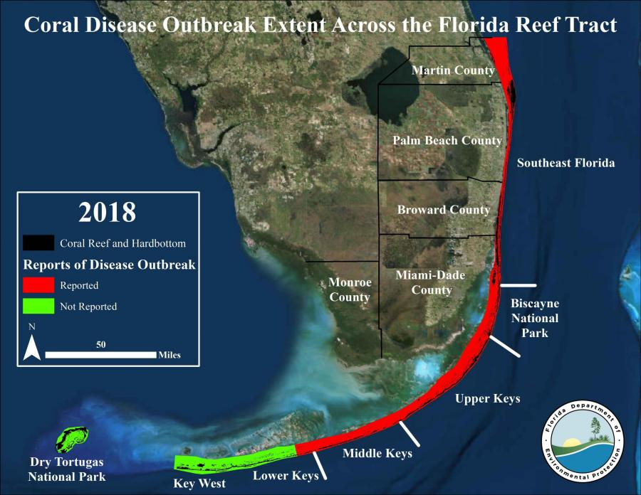 Florida Reef Tract Coral Disease Outbreak | Florida Department of