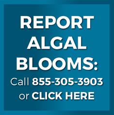 Web button to report algal blooms in Florida by calling 1-800-305-3903