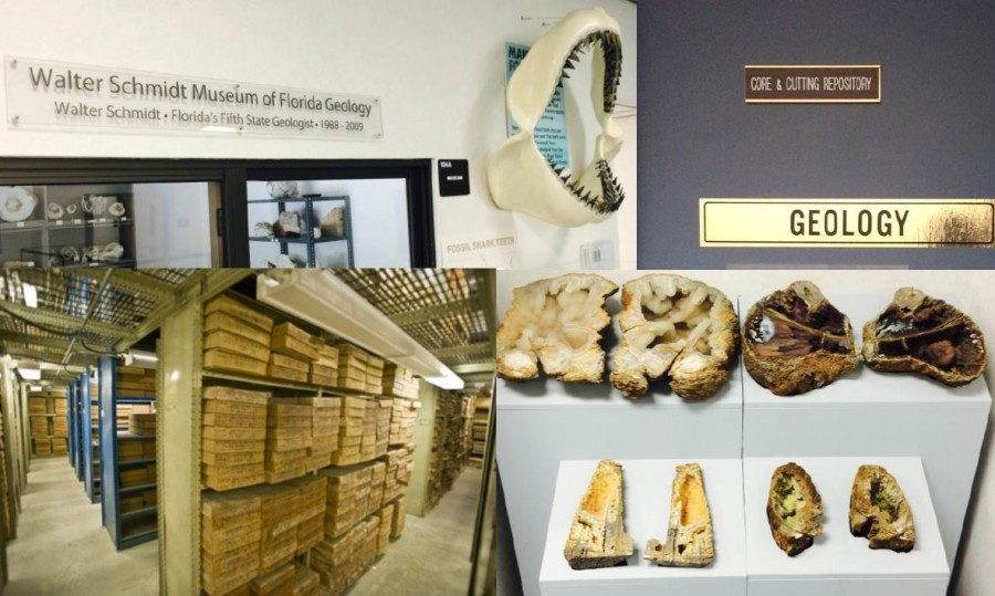 Florida Geological Survey Collections photo collage