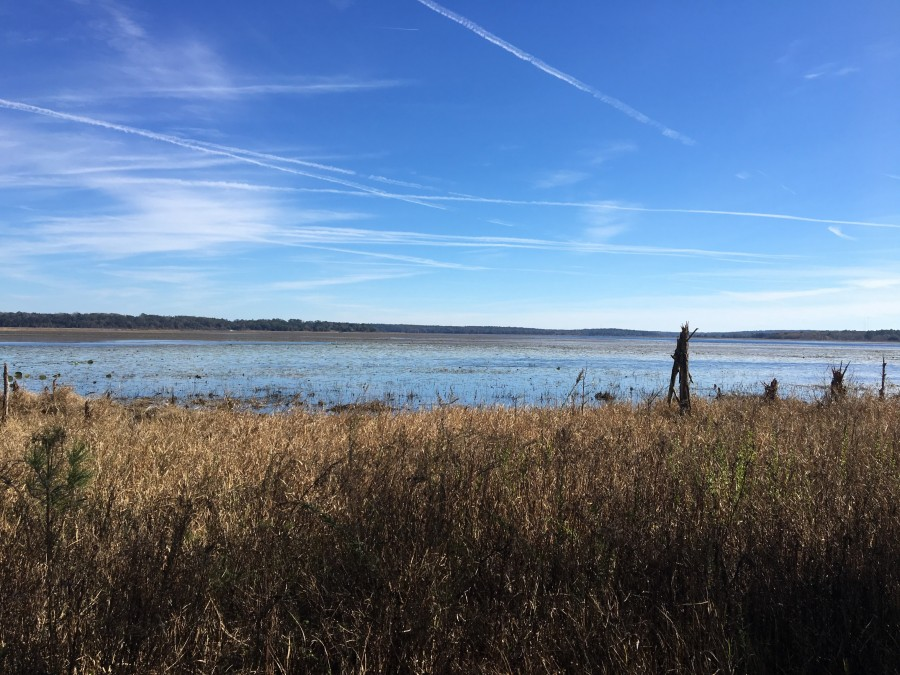 View from Vause Park at Lake Jackson Aquatic Preserve