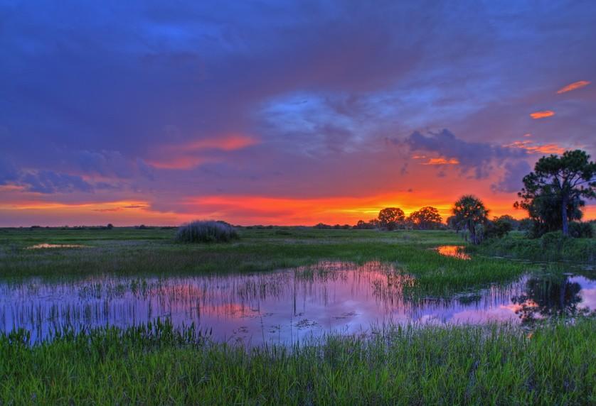 Marshy Wetland at Dawn