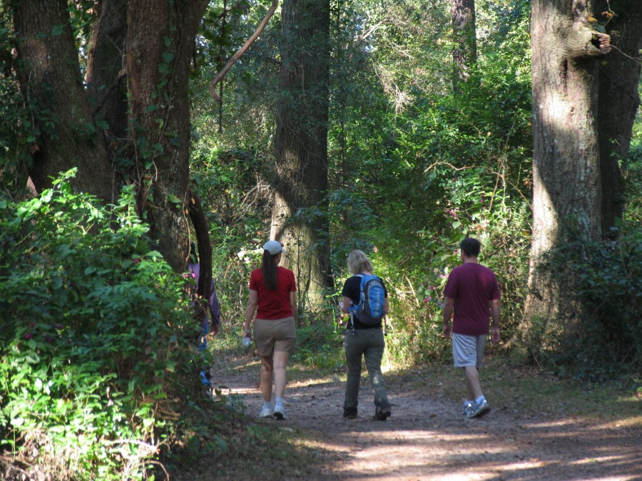 Four hikers walking on a trail at Micosukee Canopy Road Greenway