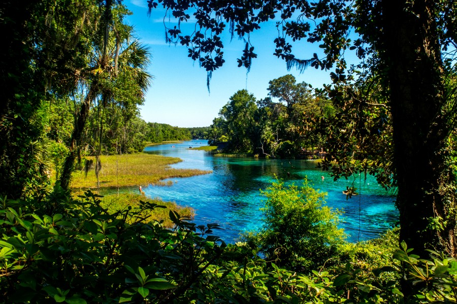 Rainbow Springs State Park - View of the springs