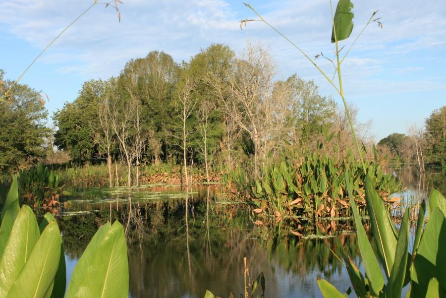 Herbaceous wetlands surrounding a lake