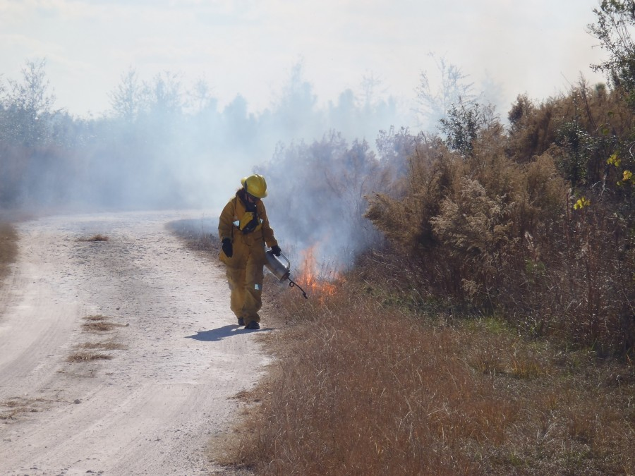 The burn boss is igniting the fire line during a prescribed fire