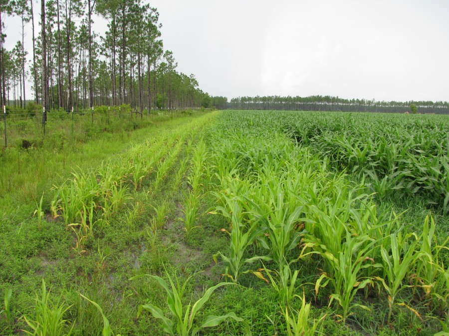 Biosolids are applied to Wetappo Farms in Panama City for agricultural use