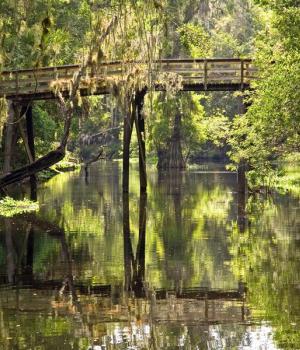 Hillsborough River State Park - Bridge crossing the river