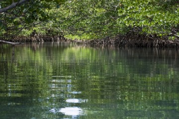 Beautiful and peaceful mangrove forest scene on a river