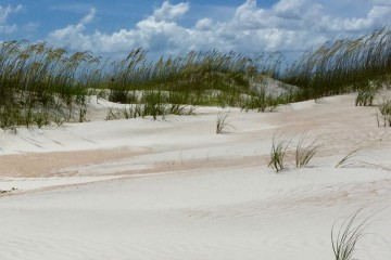 Sand dunes at Anastasia State Park