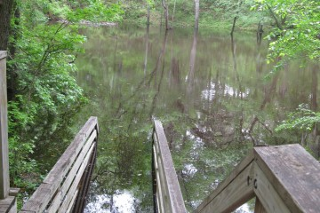 Florida Geological Survey Flooding of Stairs at Falmouth Springs, Suwannee Co, April 2009