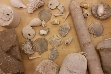 Close-up of a Florida Geological Survey fossil collection