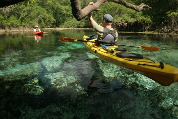 A kayaker hols onto a brach over clear water along the Ichetucknee River